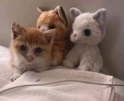 担心流浪小猫寂寞,就给它个玩偶作伴,后来…