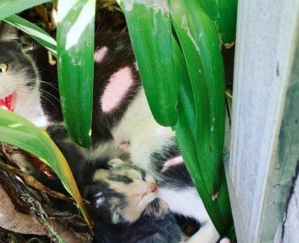 母猫拒绝小伙善意,却没能带走小猫,天天去小伙家试探,反倒被救