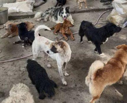被困在桥底下的几百只流浪狗呢?谁来温饱它们?