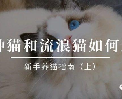 品种猫和流浪猫如何选择