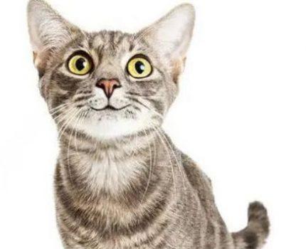 不同颜色的猫咪,竟然具有不同的性格,你知道吗?