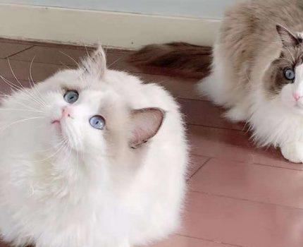 如何正确帮助母猫来抚育幼猫