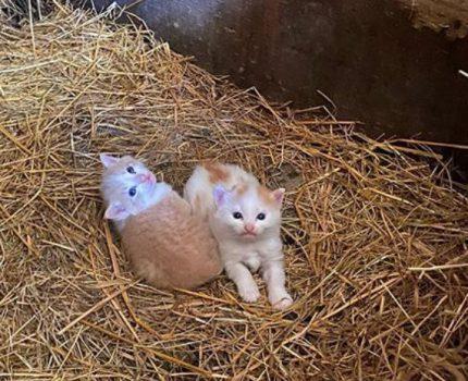 """日本大叔专给猫咪拍美照,仅凭一根""""逗猫棒"""",流浪猫也得配合他"""