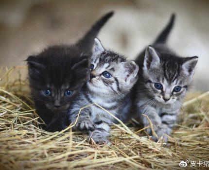 如果想养猫,我劝你别养两只以上,不然你就没有猫了