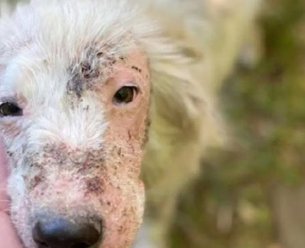 秃毛狗的大转变!救来的狗狗几个月后惊艳众人!