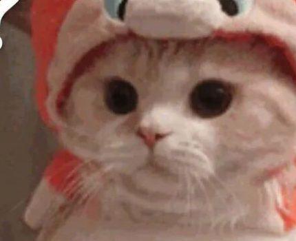 看什么看!没见过猫喝水吗?