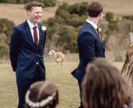 """狗狗在主人婚礼上""""拉粑粑"""",非但没把事搞砸,还让氛围更温馨了"""