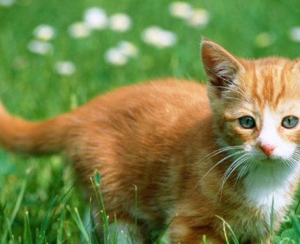 """为什么猫咪喜欢在早晨把铲屎官""""叫醒""""?"""