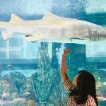 美食推荐 重庆鲨鱼纪念日餐厅
