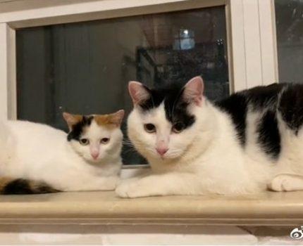 流浪猫2兄妹,被人各自领养,半年后它们再次相见,场面甚是感人