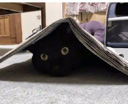 不懂就问:是不是所有的黑猫,都这么黏人?