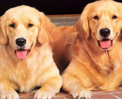 流浪狗数量剧增!狗狗伤人事件频出!这一切的源头究竟是狗还是人