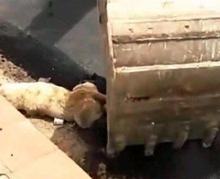 熟睡的狗狗半截身子被封入沥青路,它在痛苦挣扎时,却无人能帮它
