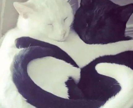 猫:我睡个觉,都是爱你的形状!