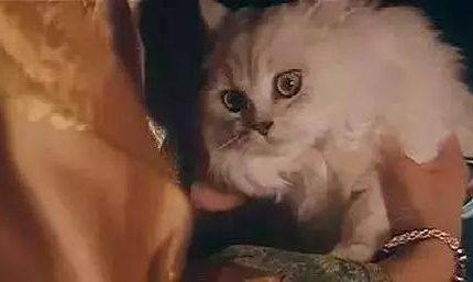 古人养猫有多费钱?给彩礼、下聘书,伙食费更是高出天际!