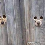 可爱又搞笑!狗狗主人的天才创意,引爆了社交网络