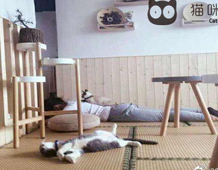 一个小猫咪就能让你坠入猫咪森林餐吧这个萌系世界