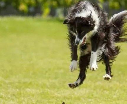 宠物狗能蠢到什么地步?网友:不仅傻而且怂,简直就是个熊孩子