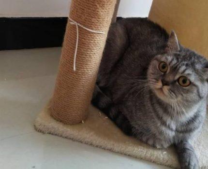 【坐标灵宝求好心人领养猫咪】