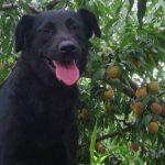 一篇关于纪念我的狗狗大黑的文章