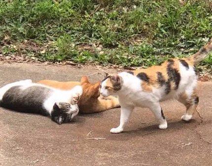 橘猫闯进后院,喂了他一次后,隔天把整个后宫都带来了!