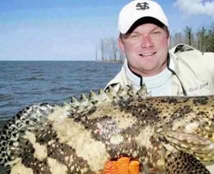石斑鱼,为什么被叫做海中鸡肉