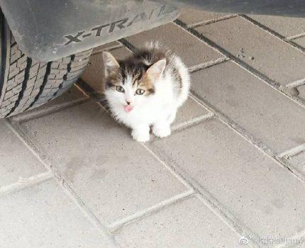 记一次和猫的故事