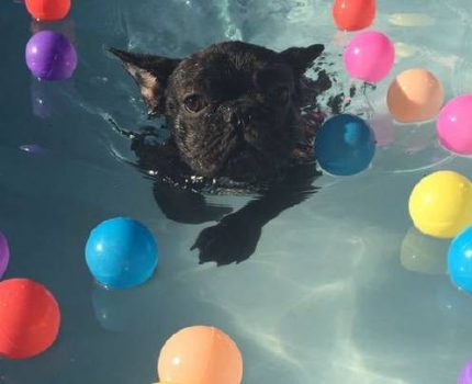 让你的狗狗喜欢水的4种方法