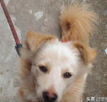 遇见流浪狗,她做出的举动,隔年狗狗竟用最珍贵的礼物回报…