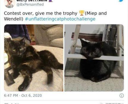 """推特网友发起""""不好看猫片""""挑战……小猫咪看了都想打人!"""