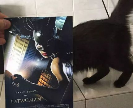 当猫咪遇上海报,这画风就变得魔性了…