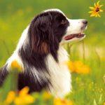 狗狗的日常生活如何照顾,你了解吗?