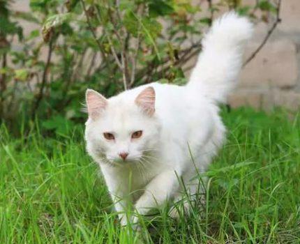 最有志气的猫妈妈:宁愿带孩子上山当流浪猫,也不愿寄人篱下