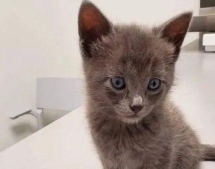 流浪小灰猫为了留下来,奋力讨好义工家中的猫狗,为自己争取幸福
