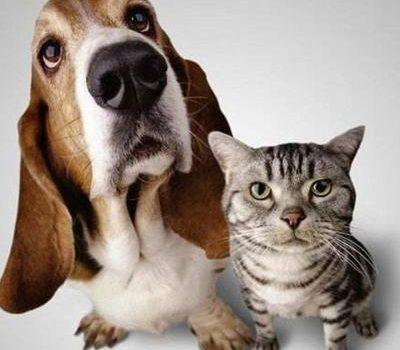 狗和猫的故事