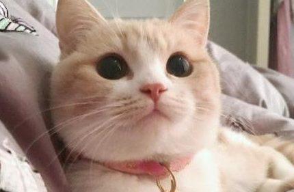 萌克百科丨铲屎官自述|我想被我家猫咪非礼该怎么做呢?