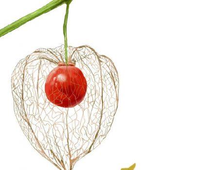 【植物与食物】奇异的水果