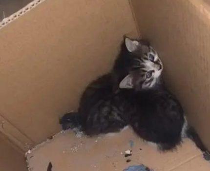 捡到2只小猫,猫妈妈找上门讨要孩子,但是真的不能给它