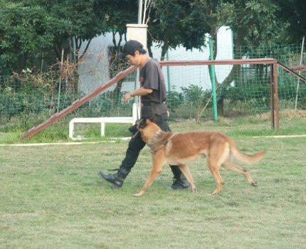 中山宠物寄养狗狗寄养的好地方——伊甸园训犬基地