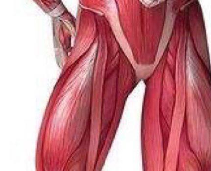 偏瘫患者下肢肌肉力量训练