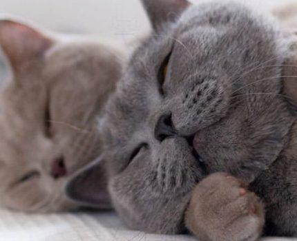全网最甜的兄弟猫,实在是太太太太太上头了!