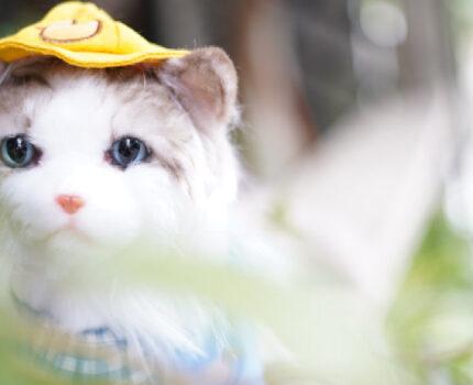 仿真猫咪玩偶,为什么是你?
