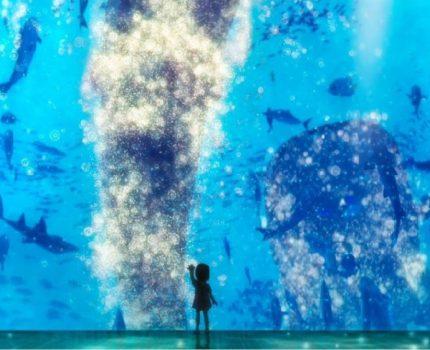 《海兽之子》——少女夏夜的一个梦(无剧透)
