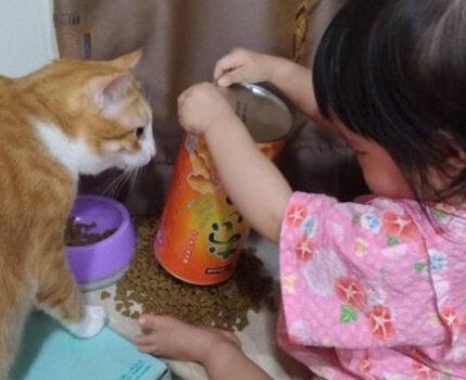 猫和宝宝抢玩具,还差点打起来,麻麻只好狠心做出这决定!