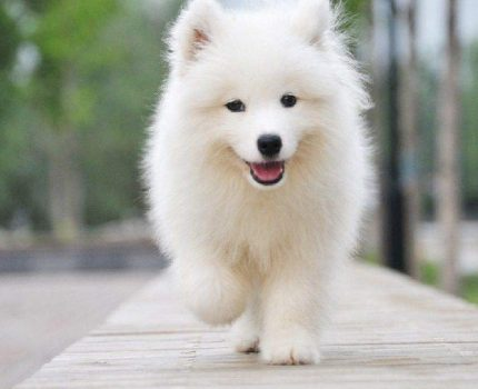 怎么训练狗狗不跟陌生人走?