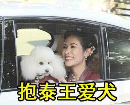 细节定成败?贵妃诗妮娜学西拉米抱狗坐车,而苏提达将小狗扔脚边