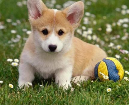 怎么训练狗狗随行?