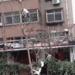 啥情况,自从养了哈士奇,小区里的树上就长满了猫