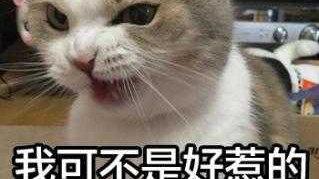"""猫咪总喜欢咬人怎么办?几招轻松""""制敌""""!"""