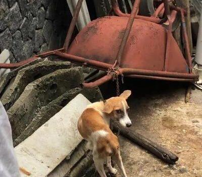 主人竟因为狗狗随处大便就不给饭吃?!获救后判若两狗